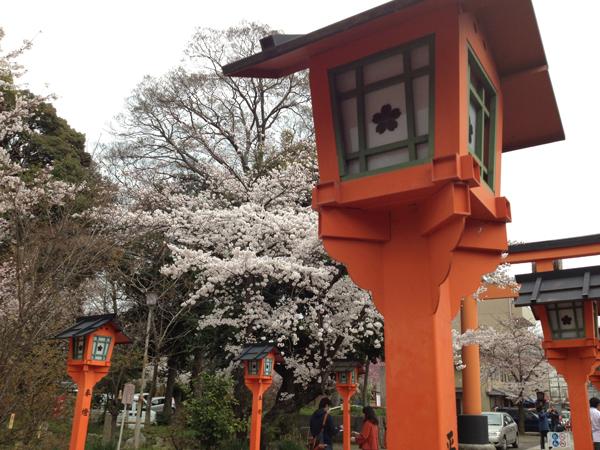 京都の桜も見ごろ!平野神社へ花見に行ってきたよ