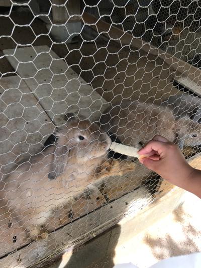 動物たちとの距離が近いので子供たちも大喜び!福知山動物園に行って来たよ!