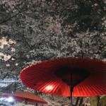 京都の夜桜ならここでしょ!平野神社に行って来た!