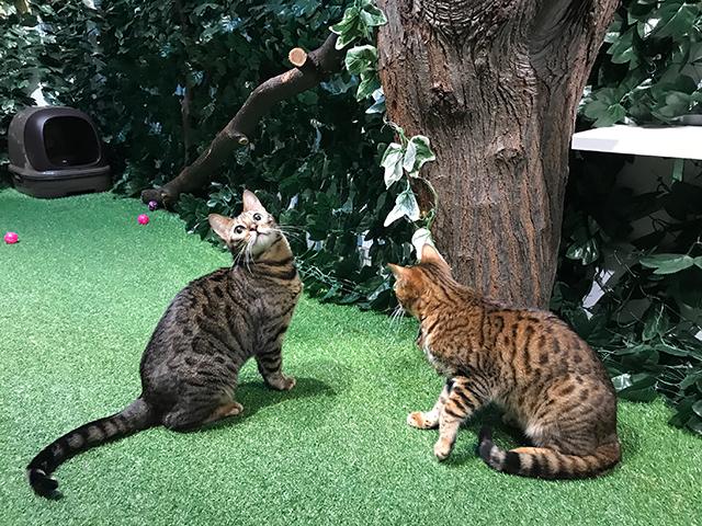 京都ひょう猫の森