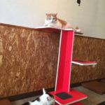 猫かわいい!!猫を飼いたいという娘のために枚方市楠葉の隠れ家的な猫カフェ にゃんだらけ に行ってきたよ!