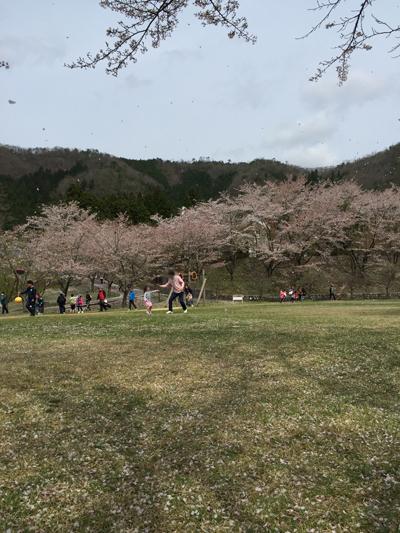 大野ダムさくら祭り