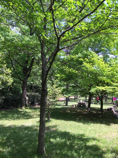 太陽が丘公園