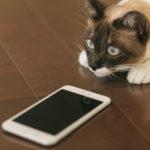 メールやLINEはどうなるの? 初めてスマホの通信速度制限を受けた話