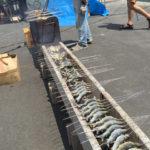 地元手作りのお祭り!キャンプに行ったら清流美山の鮎まつりをやってたので楽しんで来ましたよ!