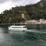 湖上でお花見!今津港発の桜クルーズで琵琶湖から見る海津大崎の桜並木が美しい!