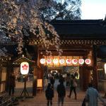 子供と一緒に夜桜を楽しもう!今年も平野神社へ花見に行ってきたよ!