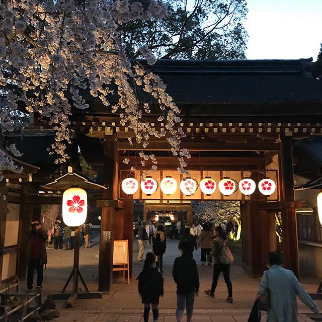 平野神社 夜桜