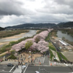 【2017】圧巻の桜のトンネルを地上25mから楽しむ!京都府八幡市の背割堤に出来たさくらであい館の展望塔にのぼってみたよ!