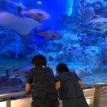 関西電力が運営する丹後の小さな水族館「丹後魚っ知館」は無料エリアが充実してる穴場的水族館でした!子連れにもオススメ!